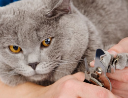 Как подстричь когти кошке?
