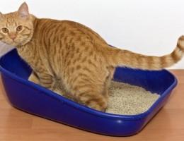 Сколько раз кошка должна ходить в туалет по-маленькому и по-большому?