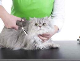 Стричь или не стричь? Все о кошачьем тримминге