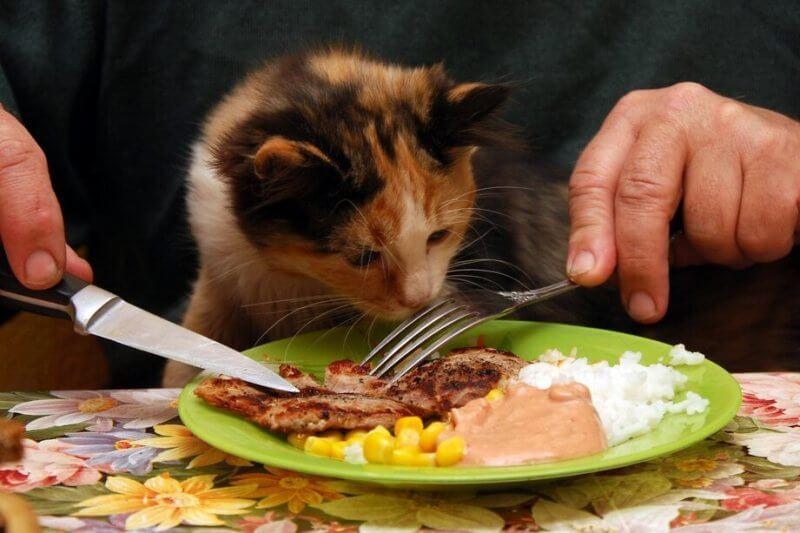 Чем нельзя кормить кошек и маленьких котят